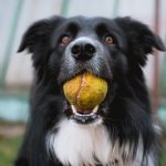 5 fitness activities you can do with your dog (first three are just amazing!)